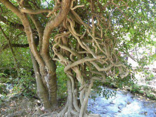 Der Baum Baum des Lebens